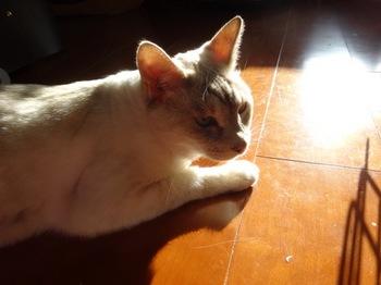 2015Oct25-Sunny6 - 1.jpg