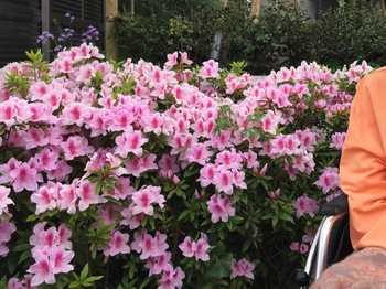 2016Apr23-Flower2 - 1.jpg