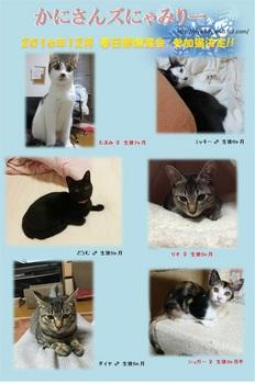 2016年12月春日部参加猫.jpg