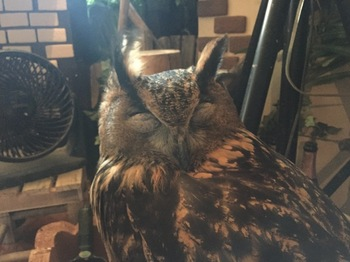 2016Jul23-Owl10 - 1.jpg