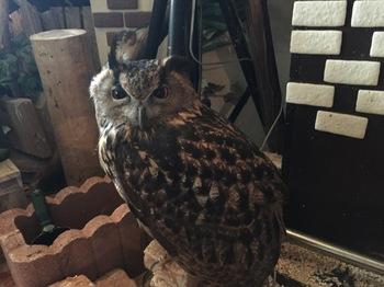 2016Jul23-Owl18 - 1.jpg