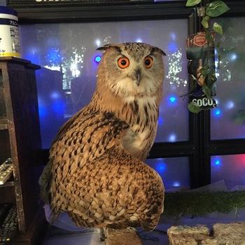 2016Jul23-Owl6 - 1.jpg