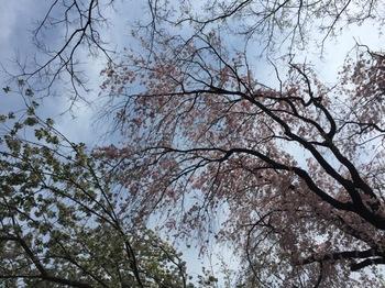 2017Apr15-Flower1 - 1.jpg