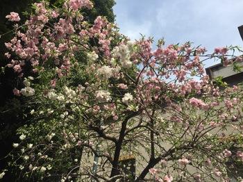 2017Apr16-Flower1 - 1.jpg