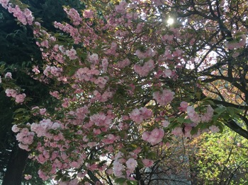2017Apr16-Flower2 - 1.jpg