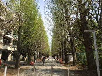 2017Apr16-Namiki - 1.jpg