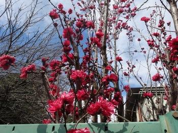 2017Apr2-Flower3 - 1.jpg