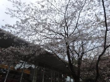 2017Apr2-Flower4 - 1.jpg