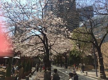 2017Apr5-Sakura3 - 1.jpg