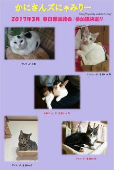 2017年3月参加猫.jpg