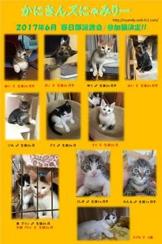 2017年6月参加猫.jpg