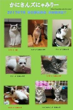 2017年7月参加猫ポスター.jpg
