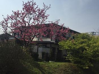 2017Mar20-Flower1 - 1.jpg
