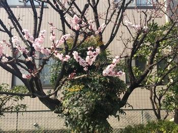 2017Mar20-Flower4 - 1.jpg