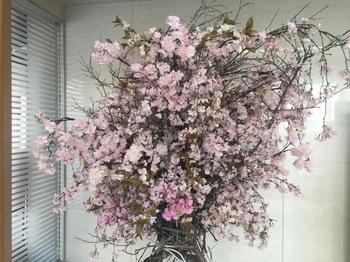 2017Mar20-Sakura - 1.jpg
