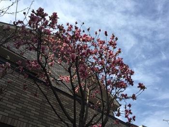 2017Mar25-Flower - 1.jpg