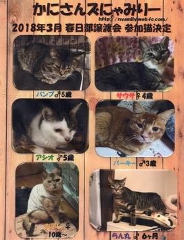 2018年3月参加猫 - 1.jpg