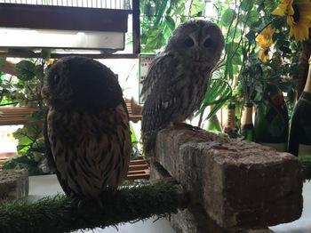 2016Jul23-Owl12 - 1.jpg