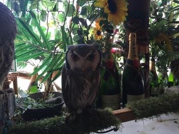 2016Jul23-Owl13 - 1.jpg