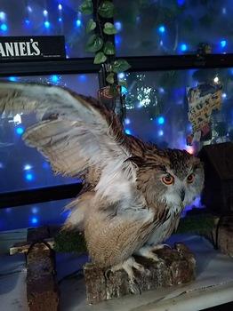 2016Jul23-Owl15 - 1.jpg