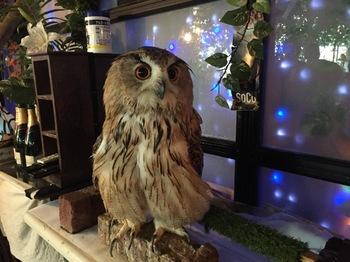 2016Jul23-Owl16 - 1.jpg