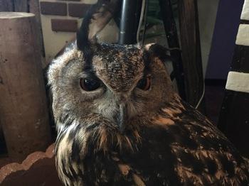 2016Jul23-Owl19 - 1.jpg