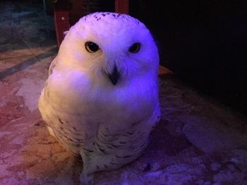2016Jul23-Owl20 - 1.jpg