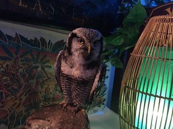2016Jul23-Owl21 - 1.jpg