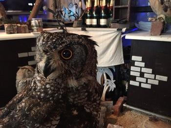 2016Jul23-Owl&Nojinyan3 - 1.jpg