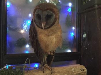 2016Jul23-Owl5 - 1.jpg