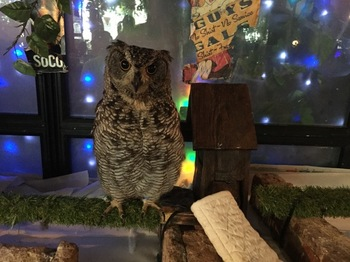 2016Jul23-Owl7 - 1.jpg