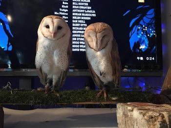 2016Jul23-Owl8 - 1.jpg