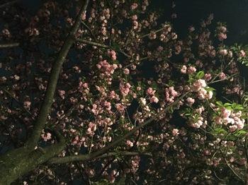 2017Apr21-Flower3 - 1.jpg
